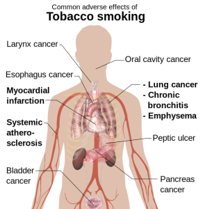 adverse_effects_of_smoking